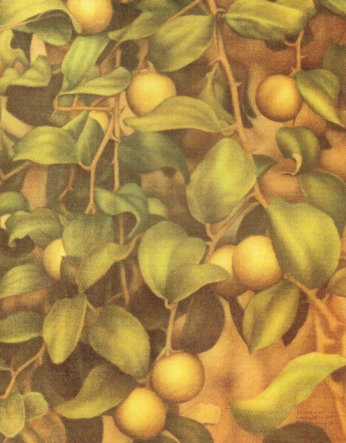 'Olijven' [Olives], paper on wood print, 73.5x60cm, 1984, De Surinaamsche Bank N.V. Collection