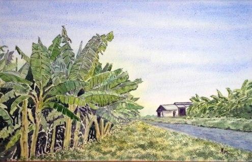 A. Murugesan, 'Banana plantation' / PHOTO Courtesy A. Murugesan